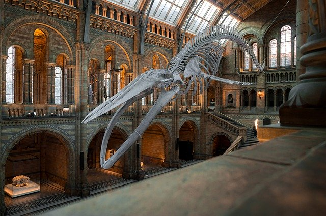 national history museum 4314035 640